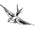 Saffron Road Australia Logo