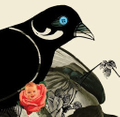 Seagull Books Store logo