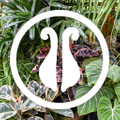 Pistils Nursery Logo