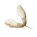 Runamok Maple Logo