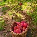 Skylake Ranch Pomegranate Products Logo
