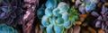 Smart Seeds Emporium Logo