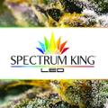 Spectrum King Led Logo