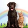 Spring Pets Logo