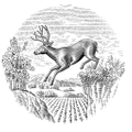Stags Leap Wine Logo