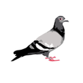 Staple Pigeon Logo