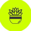 Succulent Studio Logo