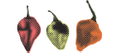 The Chilli Effect Australia Logo