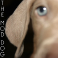 The Mod Dog Logo