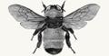 The Rare Honey Company Logo