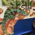 The Reptile Shop Logo