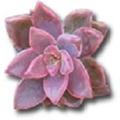 The Succulent Source Logo