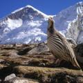 Trek Nepal Himalayas Logo