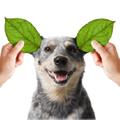 dog Vegan Dog Food Logo