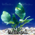 Wetplants USA Logo